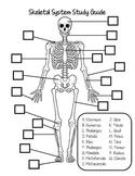 Skeletal System Study Guide