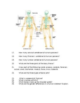 Skeletal System Study Guide for Test