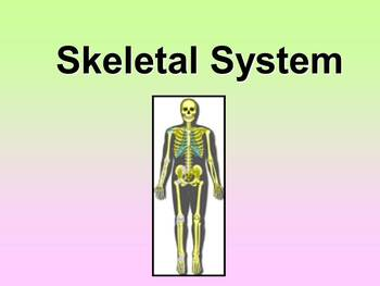 Skeletal System Teacher and Student Fill-in Notes
