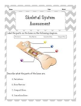 Skeletal System Test
