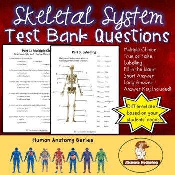 Skeletal System Test Questions by The Science Hedgehog | TpT