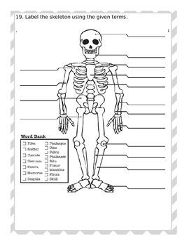 Skeletal System Test - Editable