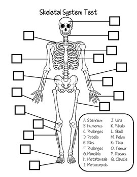 skeletal system test and answer key by fantastic in 4th