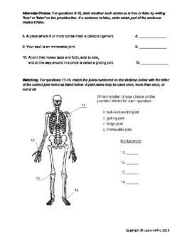 Skeletal System Test/Assessment- 3rd, 4th, 5th