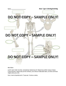 Skeletal System: Types of Bones Label and Color Activity