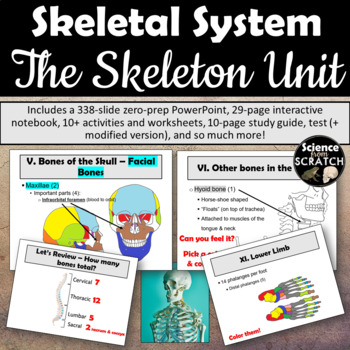 Skeletal System Unit