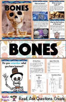 Skeletal System Unit: All About Bones