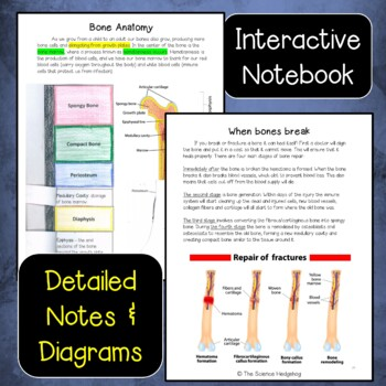 Skeletal System Unit Bundle