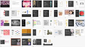 Skeletal System Unit Notes