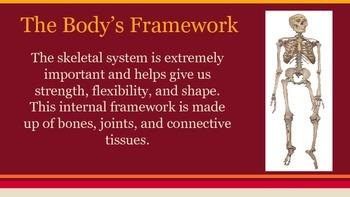 Skeletal System Unit -- Science / Health Presentation (Answer Keys Included)