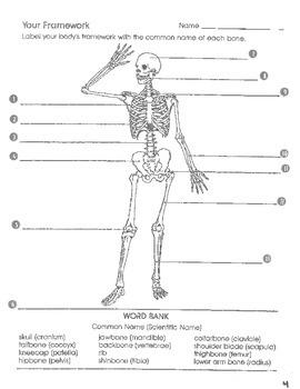 Skeletal System Unit Work