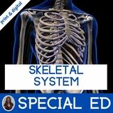 Skeletal System Unit for Special Education