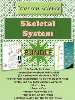 Skeletal System Unit *BUNDLE* (Unit 4 in Series)