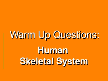 Skeletal System Warm-Up Power Point Presentation