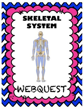 Skeletal System Webquest