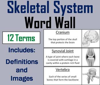 Skeletal System Word Wall Cards