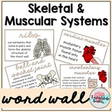 Skeletal System Word Wall   Muscular System Word Wall