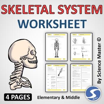 Skeletal System Worksheet Teaching Resources Teachers Pay Teachers