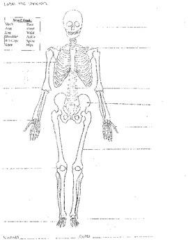 Skeletal System Worksheet 8.5x11 (Label Bones of the Skeleton)