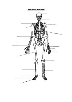 skeletal system worksheet bones diagram - Skeletal System Worksheet