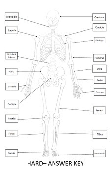 skeletal system worksheet 11x17 label bones of the skeleton - Skeletal System Worksheet