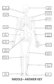 Skeletal System Worksheet 11x17 (Label Bones of the Skeleton)