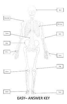 Middle Science Worksheets Skeletal System Quiz