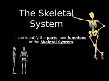 Skeletal System power point presentation