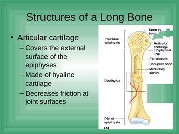 Skeletal System(47 pages)