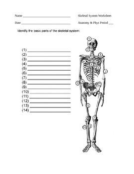 Skeletal Worksheet