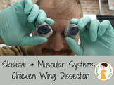 Skeletal and Muscular System Lab (Chicken Wing Dissection)
