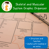 Skeletal and Muscular System Graphic Organizer