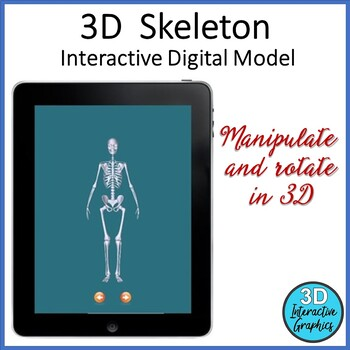 Skeleton - 3D Graphic for Whiteboards and Smartboards
