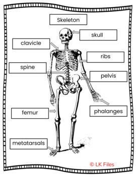 Skeleton - Bones, Bones, Bones - A Name Labeling Activity for Learning Centers