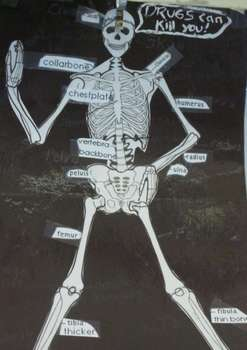 Skeleton Cut & Paste Unit - Primary Grades