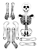 Skeleton Jumping Jack Toy Anatomy Project With Bones Labeled