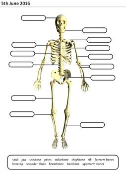 Skeleton Key Terms Printable