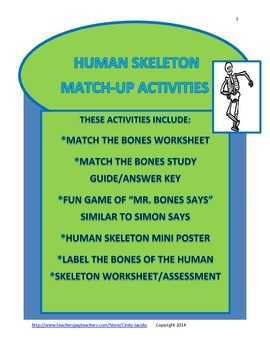 Skeleton Match-Up Activities, Skeleton, Human Body