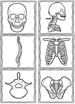 Skeleton Matching and Worksheets