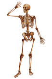 Skeleton - Worksheet PART 1