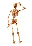 Skeleton - Worksheet PART 2