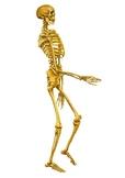 Skeleton - Worksheet PART 3