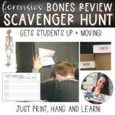 Skeleton and Bones   Scavenger Hunt Review