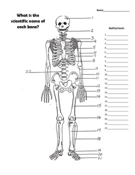 SKELETAL AND MUSCULAR SYSTEM BUNDLE