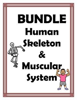 SKELETAL AND MUSCULAR SYSTEM BUNDLE