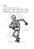 Skeleton labelling worksheet - simple