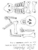 Skeleton puzzle pieces