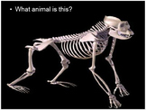 Skeletons, Bones, Name that Animal based on its Skeleton Lesson PowerPoint