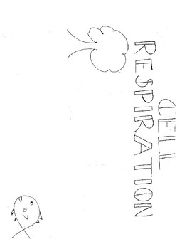 Sketch Notes Aerobic Cell Resipiration