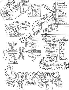 Sketch Notes GENETICS BUNDLE! W/Teacher's Guide & Student Notes! Includes 5!